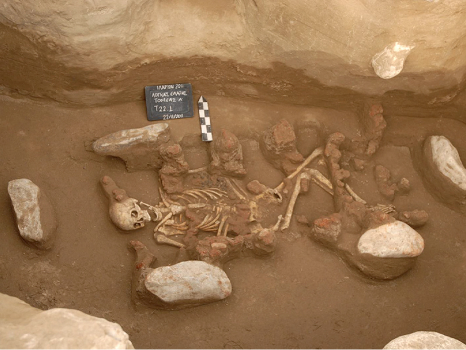 Skeleton of one of the two individuals who lived in the middle of the Bronze Age and whose complete genome was reconstructed and sequenced by the Lausanne team. It comes from the archaeological site of Elati-Logkas, in northern Greece. Credit: Ephorate of Antiquities of Kozani, Hellenic Ministry of Culture, Greece. Courtesy of Dr Georgia Karamitrou-Mentessidi.